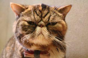 マツコ会議の猫背改善スタジオはきゃっとばっくでトレーナーは小林俊夫
