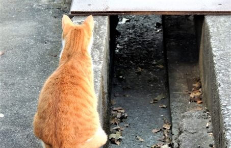 マツコ会議の猫背改善スタジオきゃっとばっくの料金やアクセスは?