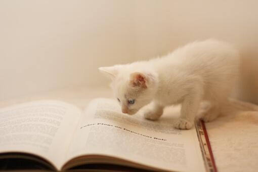 水上颯の本のオススメや勉強法は?東大王や高校生クイズ2012の出演者