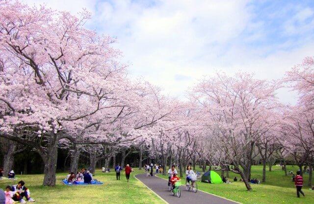 代々木公園のお花見2018!場所取りの時間やルールは?混雑状況も