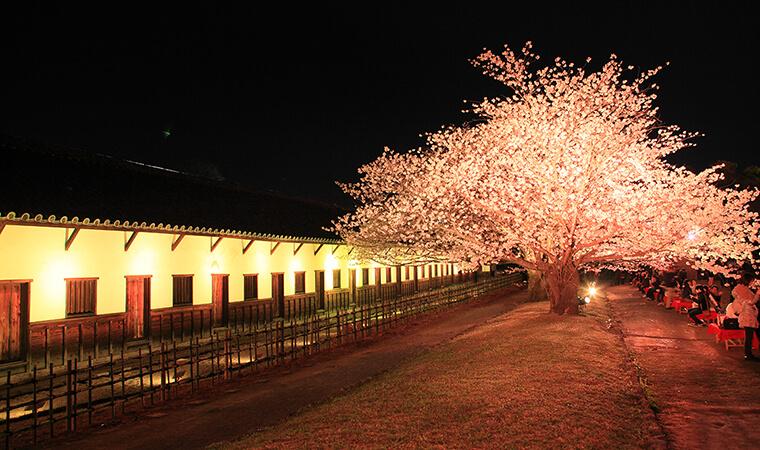 舞鶴公園のお花見2018!場所取りは必要?ライトアップの時間