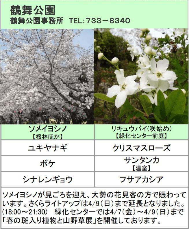 鶴舞公園のお花見2018!桜の見頃は?夜桜のライトアップ情報