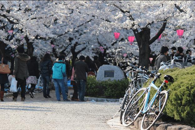 鶴舞公園のお花見2018!屋台の時間や期間はいつまで?
