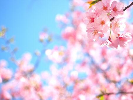 大阪城公園のお花見2018!桜の見頃は?夜桜のライトアップ情報