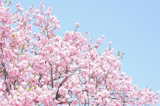 大阪城公園のお花見2018!バーベキューの予約や料金は?
