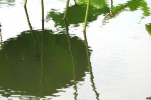 池の水ぜんぶ抜く2018年3月11日ロケ地はどこ?ゲスト出演者は誰