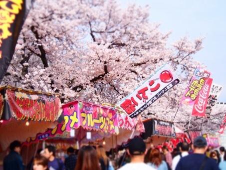 函館公園の桜2018!屋台の時間や場所は?