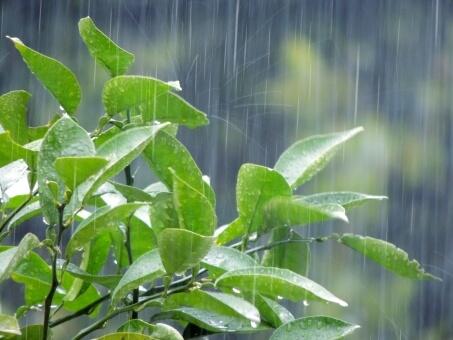 森のビアガーデンが雨天の場合は?テント席の予約方法!